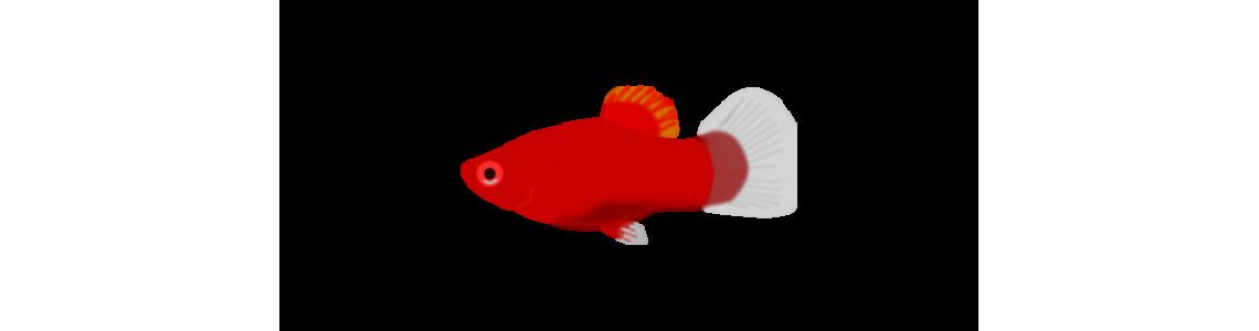Małe ryby 1-4 cm